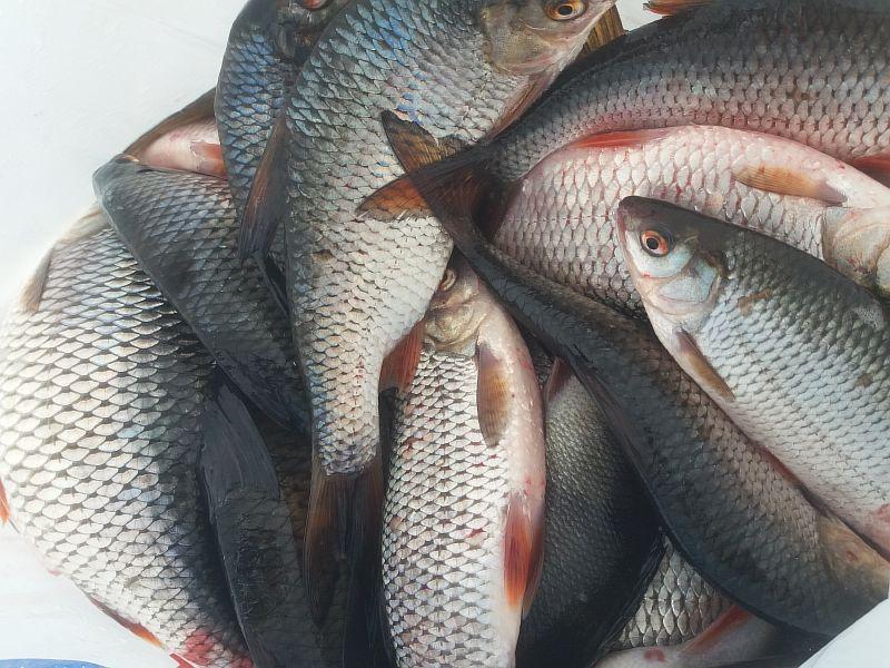 как и какую рыбу лучше ловить в мае